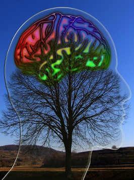 cerebrogimp
