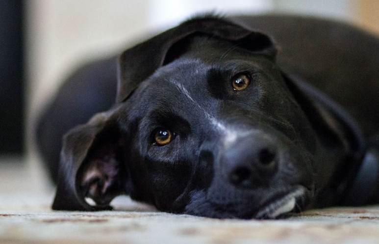 Un perro negro llamado depresión